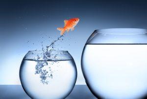 Organisationsentwicklung, Personalentwicklung, Coaching, Potenzial, Veränderung, Michele Dunlap